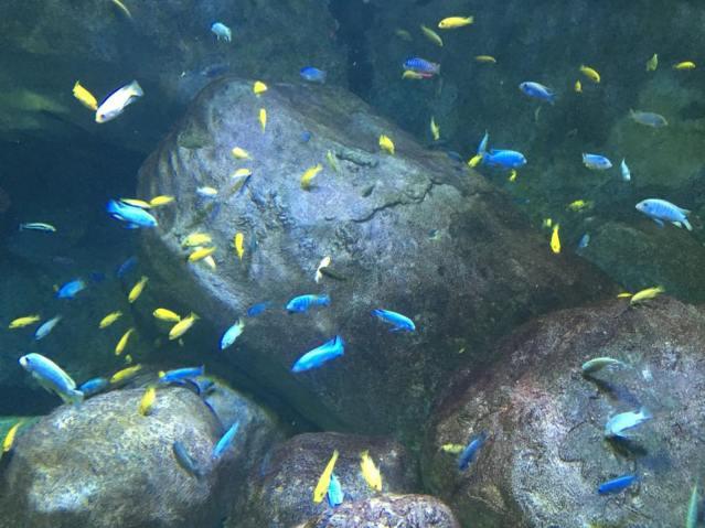 dory-aquarium